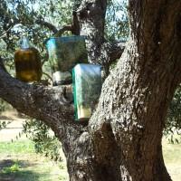 Olio di olive Leccino - I nostri prodotti in vendita